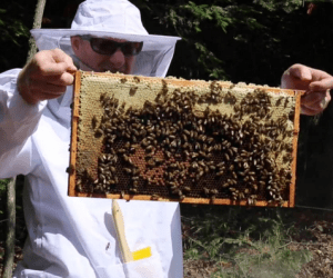 bees todd holding a frame