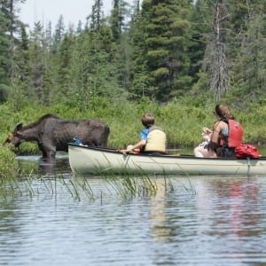 early season moose encounter at algonquin park amable du fond river - mom and son in a canoe